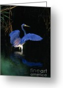 Everglades Greeting Cards - Tri-colored Heron - FS000031 Greeting Card by Daniel Dempster