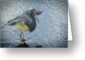 Florida Living Greeting Cards - Tricolored Heron Greeting Card by Carolyn Marshall