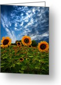 Natural Light Greeting Cards - Trinity Greeting Card by Phil Koch