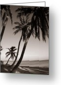 On The Beach Greeting Cards - Triple Palms Greeting Card by Susanne Van Hulst