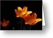 Orange Flower Photo Greeting Cards - Triples Greeting Card by Lois Bryan