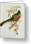 Litho Greeting Cards - Trogon Ambiguus Greeting Card by John Gould