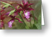 Red Orchid Blooms Greeting Cards - Tropical Beauty Greeting Card by Debra and Dave Vanderlaan