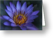 Blue Flowers Digital Art Greeting Cards - Tropical Dreams Greeting Card by Sharon Mau