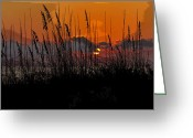 Sea Oats Digital Art Greeting Cards - Tropical evening Greeting Card by David Lee Thompson