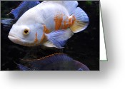 Colette Greeting Cards - Tropical Fish  Greeting Card by Colette Hera  Guggenheim