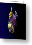 Indiana Photography Photo Greeting Cards - Tropical Fish Greeting Card by Pieceoflace Photography