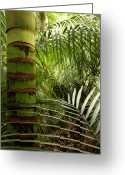 Ferns Greeting Cards - Tropical forest jungle Greeting Card by Les Cunliffe