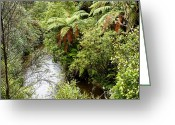 Rain Forest Greeting Cards - Tropical forest Greeting Card by Les Cunliffe