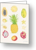 Papaya Greeting Cards - Tropical Fruit 1 Greeting Card by Joel Carlson