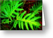 Tropical Gardens Greeting Cards - Tropical green Greeting Card by Perry Webster