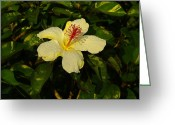 Tropical Photographs Greeting Cards - Tropical Hibiscus Greeting Card by John  Greaves