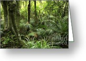 Tropical Photographs Photo Greeting Cards - Tropical jungle Greeting Card by Les Cunliffe