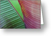 Art In Squares Greeting Cards - Tropical Leaves No 2 2009 Greeting Card by Joseph Duba