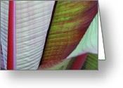 Art In Squares Greeting Cards - Tropical Leaves No 4 2009 Greeting Card by Joseph Duba