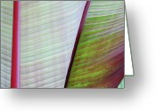 Art In Squares Greeting Cards - Tropical Leaves No 5  2009 Greeting Card by Joseph Duba