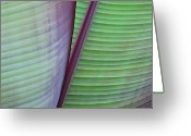 Art In Squares Greeting Cards - Tropical Leaves No 7  2009 Greeting Card by Joseph Duba