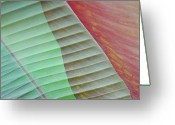Art In Squares Greeting Cards - Tropical Leaves No 8  2009 Greeting Card by Joseph Duba