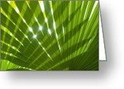 Sunlight Greeting Cards - Tropical Palm Leaf Greeting Card by Christopher Elwell and Amanda Haselock
