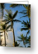 Tropical Sunset Greeting Cards - Tropical Palm Trees of Maui Hawaii Greeting Card by Pierre Leclerc