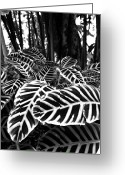 Pacific Islands Greeting Cards - Tropical Plants On The Rainforest Floor Greeting Card by Melinda Podor