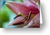 Flower Stamen Greeting Cards - Tropical Sensation Greeting Card by Charles Dobbs