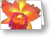 Flower Blossom Greeting Cards - Tropical Sunrise Orchid Greeting Card by Kerri Ligatich