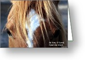 Horse Pyrography Greeting Cards - Trust Greeting Card by William Gilroy