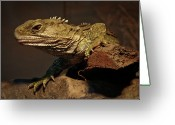 Endangered Species Greeting Cards - Tuatara Greeting Card by Alastair Stewart