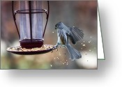 Titmouse Greeting Cards - Tufted Seed Splash Greeting Card by Bill Tiepelman