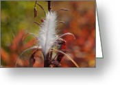 Fireweed Greeting Cards - Tufted Seeds Of The Fireweed Plant Greeting Card by George F. Herben
