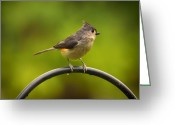 Titmouse Greeting Cards - Tufted Titmouse on Pole Greeting Card by Bill Tiepelman