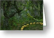 Lichen Greeting Cards - Tulgey Wood Greeting Card by Ian Anderson