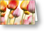 Impressions Greeting Cards - Tulip - Impressions 1 Greeting Card by Martin Williams