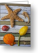  Color  Colorful Greeting Cards - Tulip and starfish Greeting Card by Garry Gay