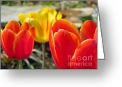 Easter Flowers Greeting Cards - Tulip Celebration Greeting Card by Karen Wiles