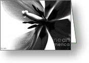 Flower Cards Greeting Cards - Tulip in Black and White Greeting Card by Jayne Logan