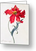 Georg Greeting Cards - Tulip Perroquet Rouge Greeting Card by Georg Dionysius Ehret