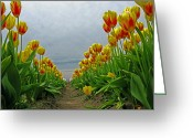One Point Perspective Greeting Cards - Tulip Rows Greeting Card by Jim Cottingham