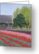 Lanscape Pastels Greeting Cards - Tulip Season Greeting Card by Marie-Claire Dole