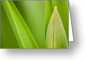 Close Up Greeting Cards - Tulip Greeting Card by Silke Magino