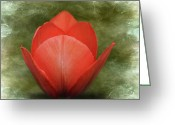 Green And White Greeting Cards - Tulip Greeting Card by Steven  Michael