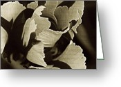 Brown Tones Photo Greeting Cards - Tulip Whirled  Greeting Card by Chris Berry