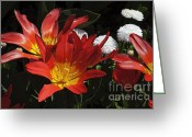 White Daisies Greeting Cards - Tulips and Daisies Greeting Card by Louise Heusinkveld