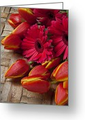Dew Greeting Cards - Tulips and red daisies  Greeting Card by Garry Gay