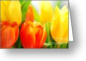 Shine Greeting Cards - Tulips Greeting Card by Elena Elisseeva