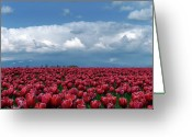 Washington State Greeting Cards - Tulips Festival Greeting Card by Taken by Simon Yu