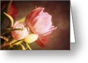 Tulips Greeting Cards - Tulips in a pink haze Greeting Card by Cathie Tyler