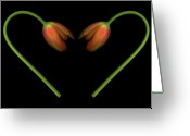 Heart-shape Greeting Cards - Tulips In Shape Of Heart Greeting Card by Marlene Ford