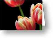 James Barnes Greeting Cards - Tulips Greeting Card by James Barnes